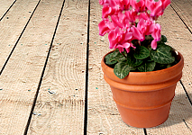 Move plants off your deck